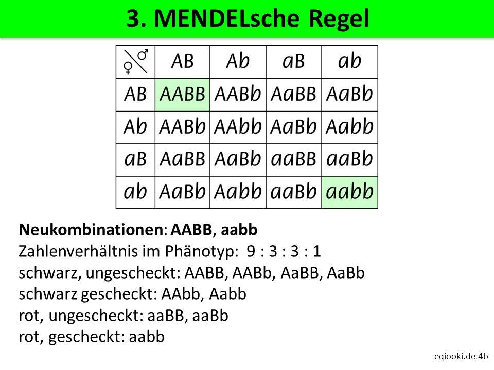 3. MENDELsche Regel Neukombinationen: AABB, aabb