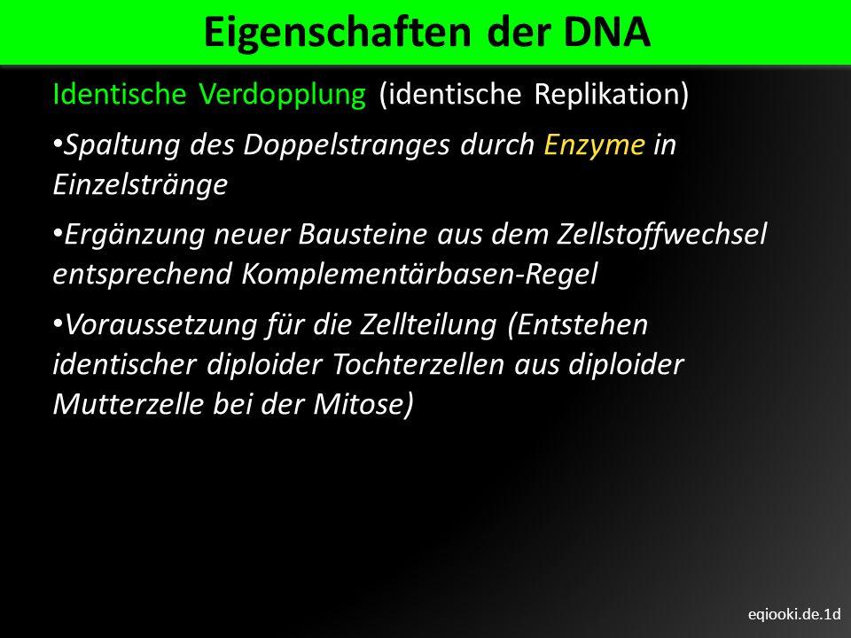 Eigenschaften der DNA Identische Verdopplung (identische Replikation)