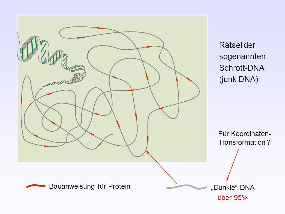 Rätsel der sogenannten Schrott-DNA (junk DNA)
