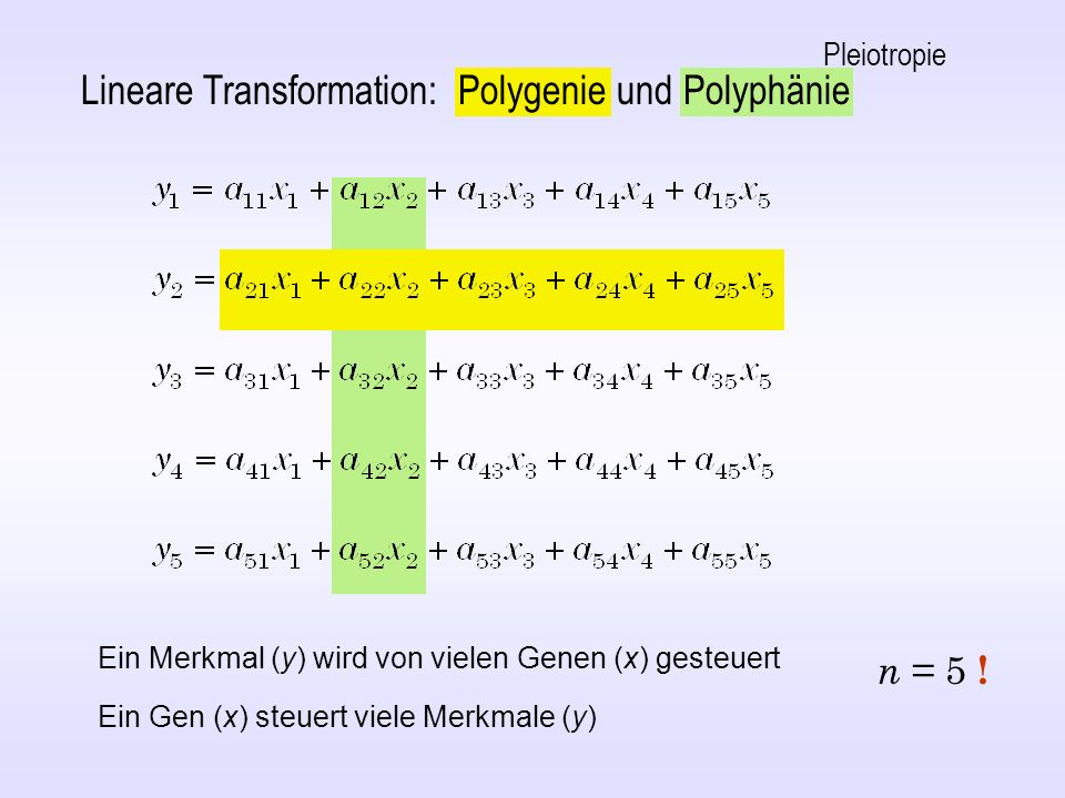 Lineare Transformation: Polygenie und Polyphänie