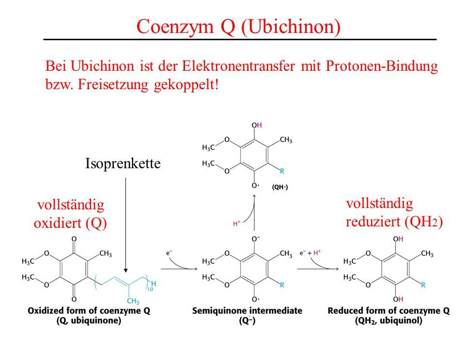 Coenzym Q (Ubichinon) Bei Ubichinon ist der Elektronentransfer mit Protonen-Bindung. bzw. Freisetzung gekoppelt!