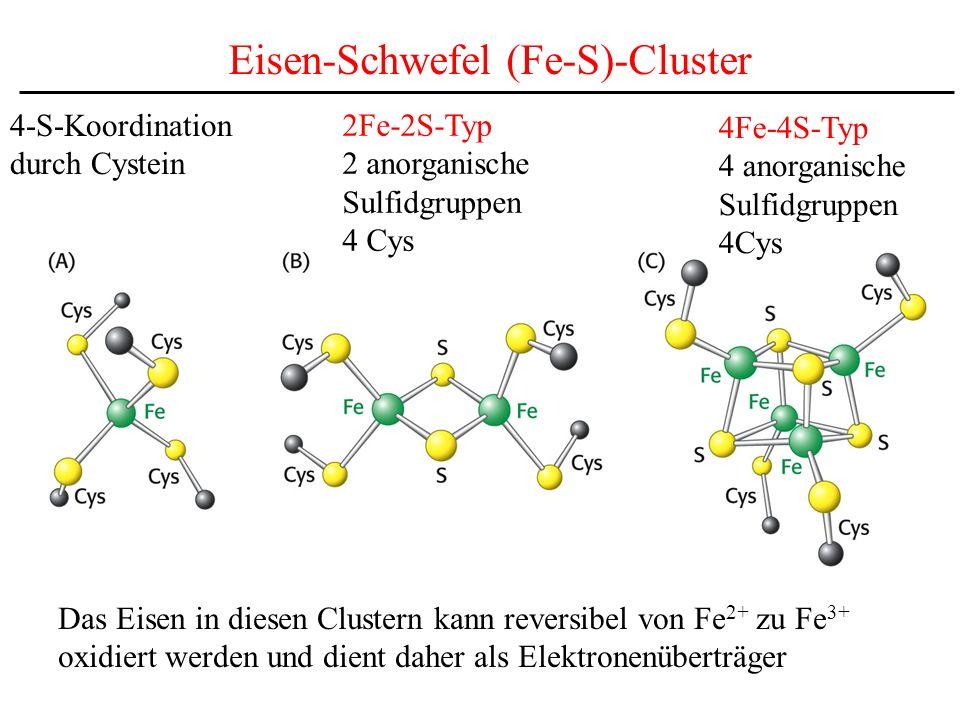Eisen-Schwefel (Fe-S)-Cluster