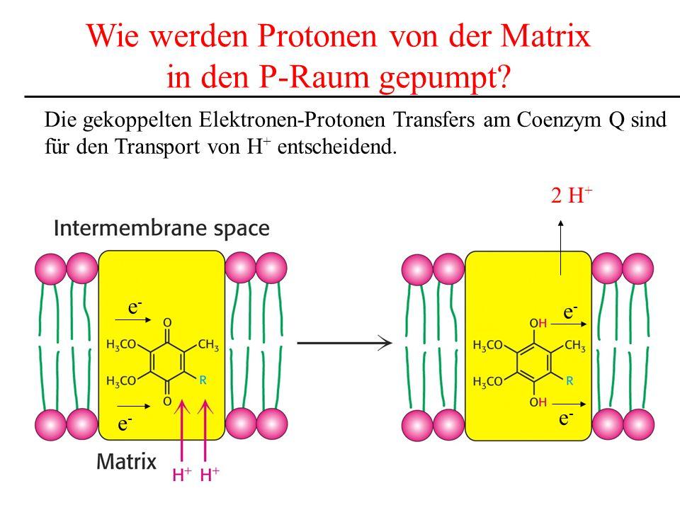 Wie werden Protonen von der Matrix
