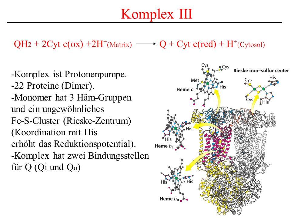 Komplex III QH2 + 2Cyt c(ox) +2H+(Matrix) Q + Cyt c(red) + H+(Cytosol)