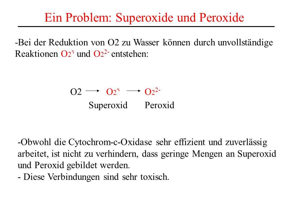 Ein Problem: Superoxide und Peroxide