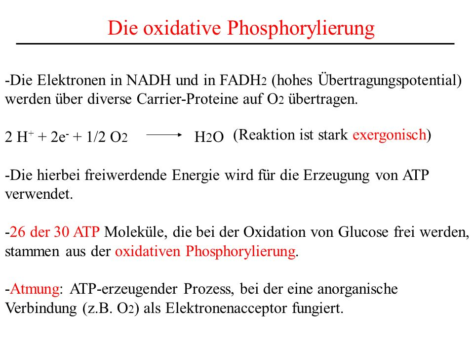 Die oxidative Phosphorylierung