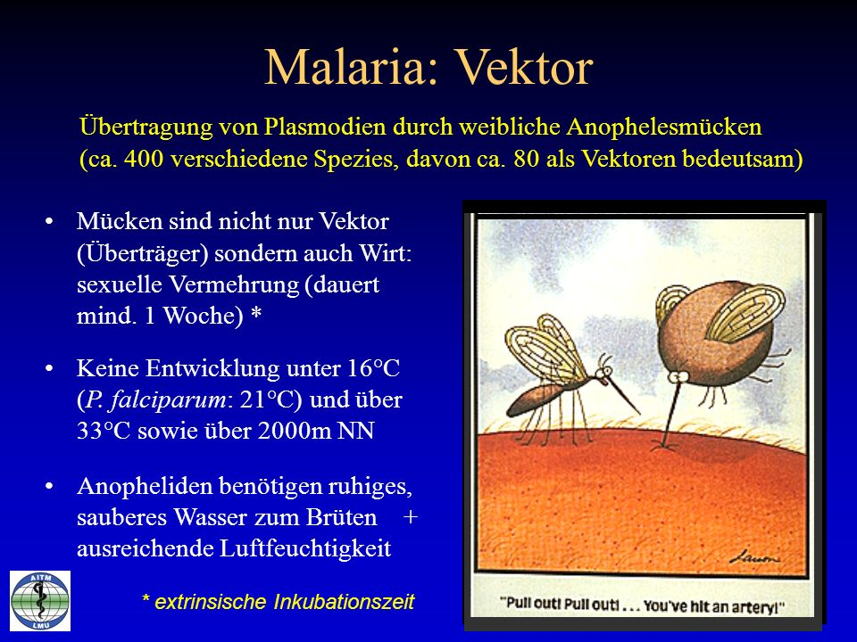 Malaria: VektorÜbertragung von Plasmodien durch weibliche Anophelesmücken. (ca. 400 verschiedene Spezies, davon ca. 80 als Vektoren bedeutsam)