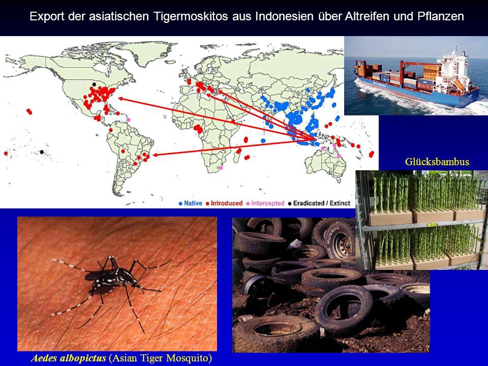 Export der asiatischen Tigermoskitos aus Indonesien über Altreifen und Pflanzen