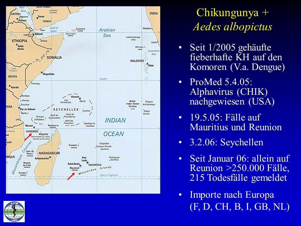 Chikungunya + Aedes albopictus