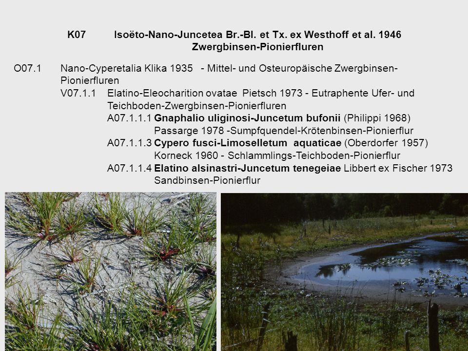 K07. Isoëto-Nano-Juncetea Br. -Bl. et Tx. ex Westhoff et al. 1946