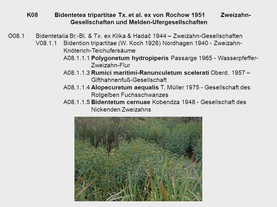 K08. Bidentetea tripartitae Tx. et al. ex von Rochow 1951