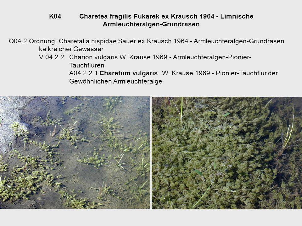 K04 Charetea fragilis Fukarek ex Krausch 1964 - Limnische Armleuchteralgen-Grundrasen