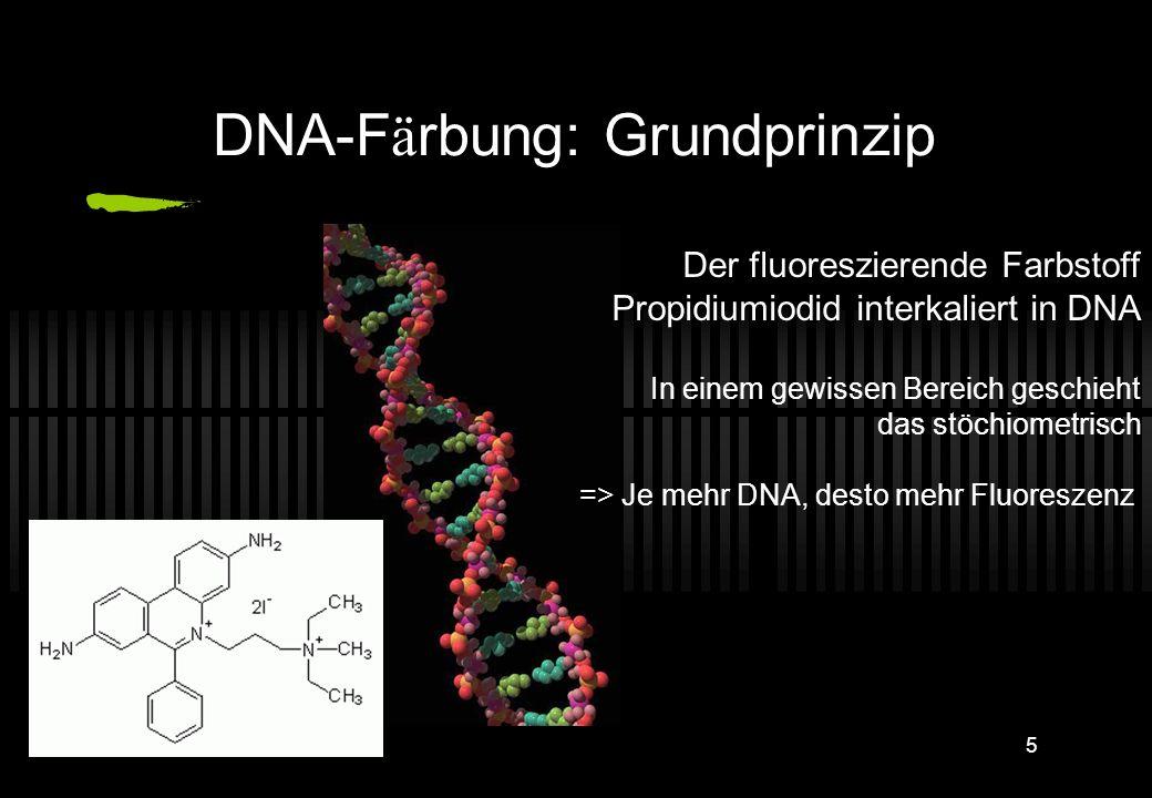 DNA-Färbung: Grundprinzip