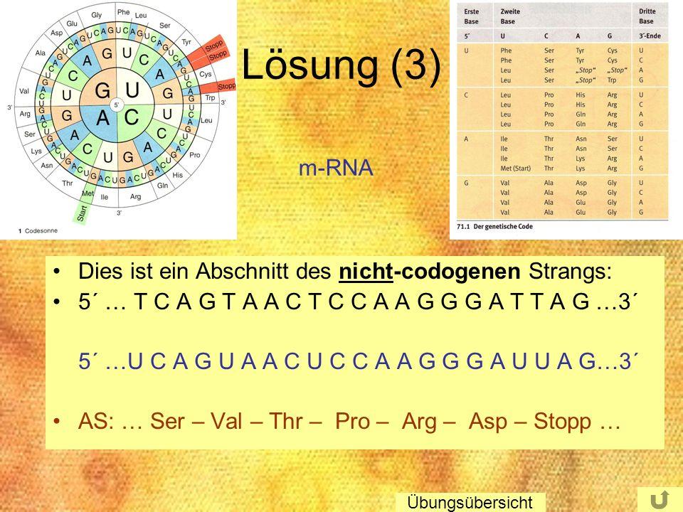Lösung (3) m-RNA Dies ist ein Abschnitt des nicht-codogenen Strangs: