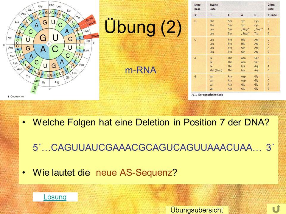 Übung (2) m-RNA Welche Folgen hat eine Deletion in Position 7 der DNA