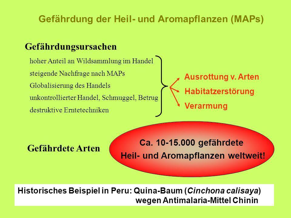 Gefährdung der Heil- und Aromapflanzen (MAPs)