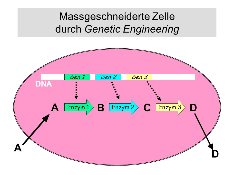 Massgeschneiderte Zelle durch Genetic Engineering