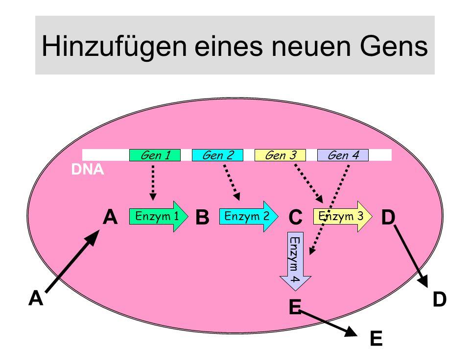 Hinzufügen eines neuen Gens