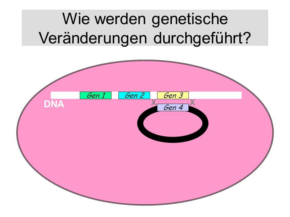 Wie werden genetische Veränderungen durchgeführt