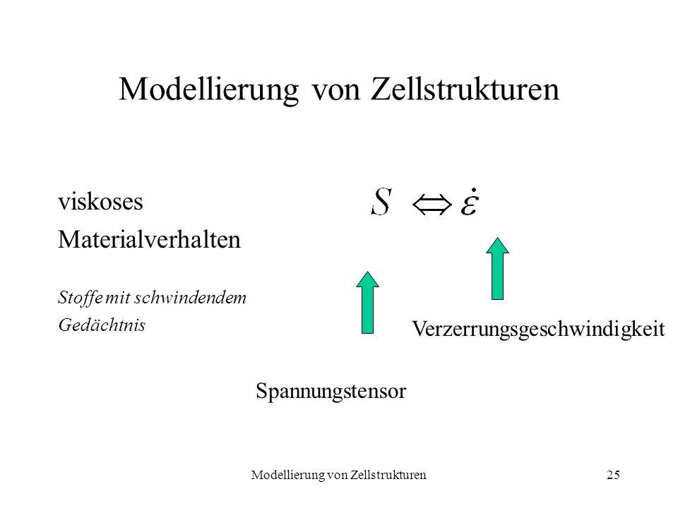 Modellierung von Zellstrukturen