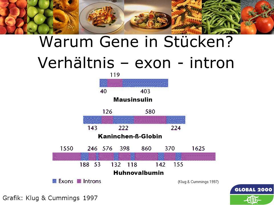 Warum Gene in Stücken Verhältnis – exon - intron