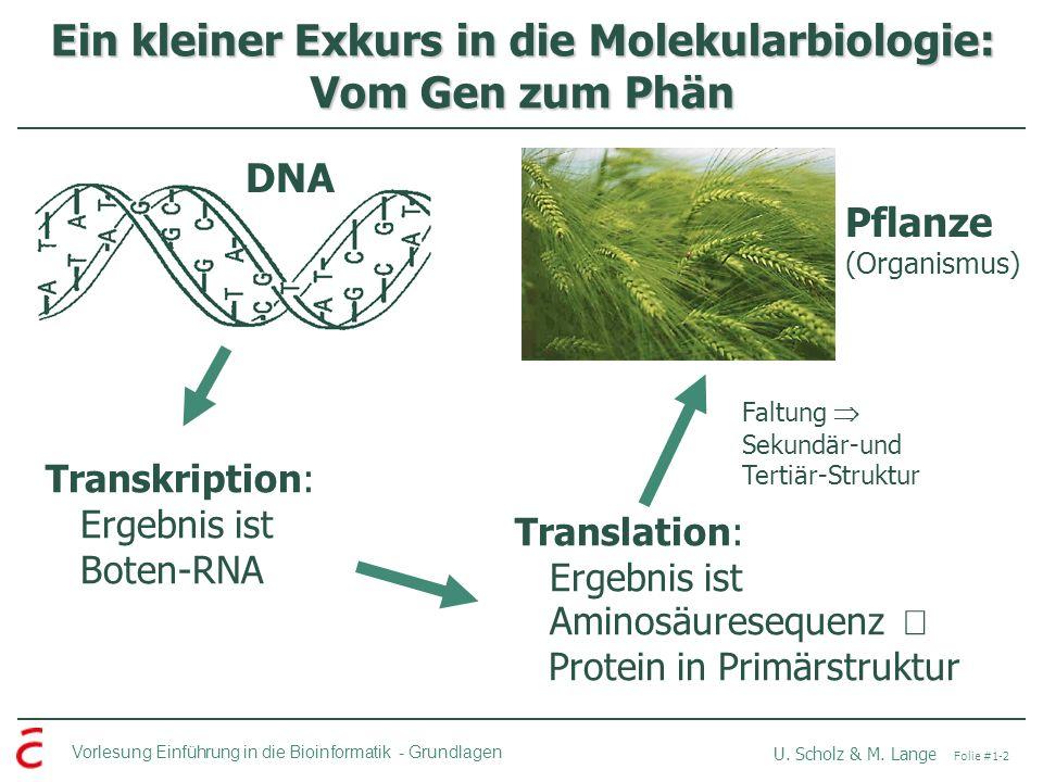 Ein kleiner Exkurs in die Molekularbiologie: Vom Gen zum Phän