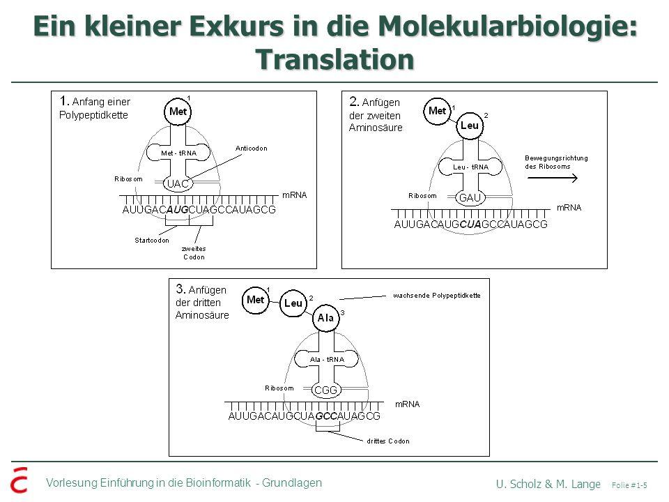 Ein kleiner Exkurs in die Molekularbiologie: Translation