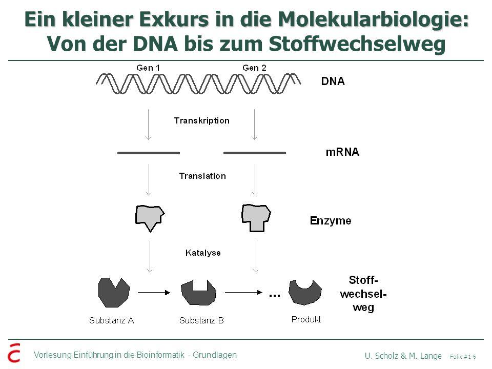 Ein kleiner Exkurs in die Molekularbiologie: Von der DNA bis zum Stoffwechselweg