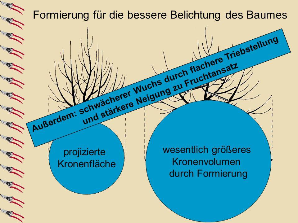 Formierung für die bessere Belichtung des Baumes
