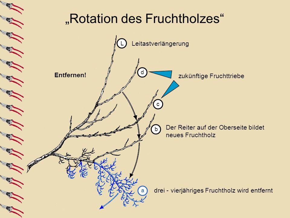 """""""Rotation des Fruchtholzes"""