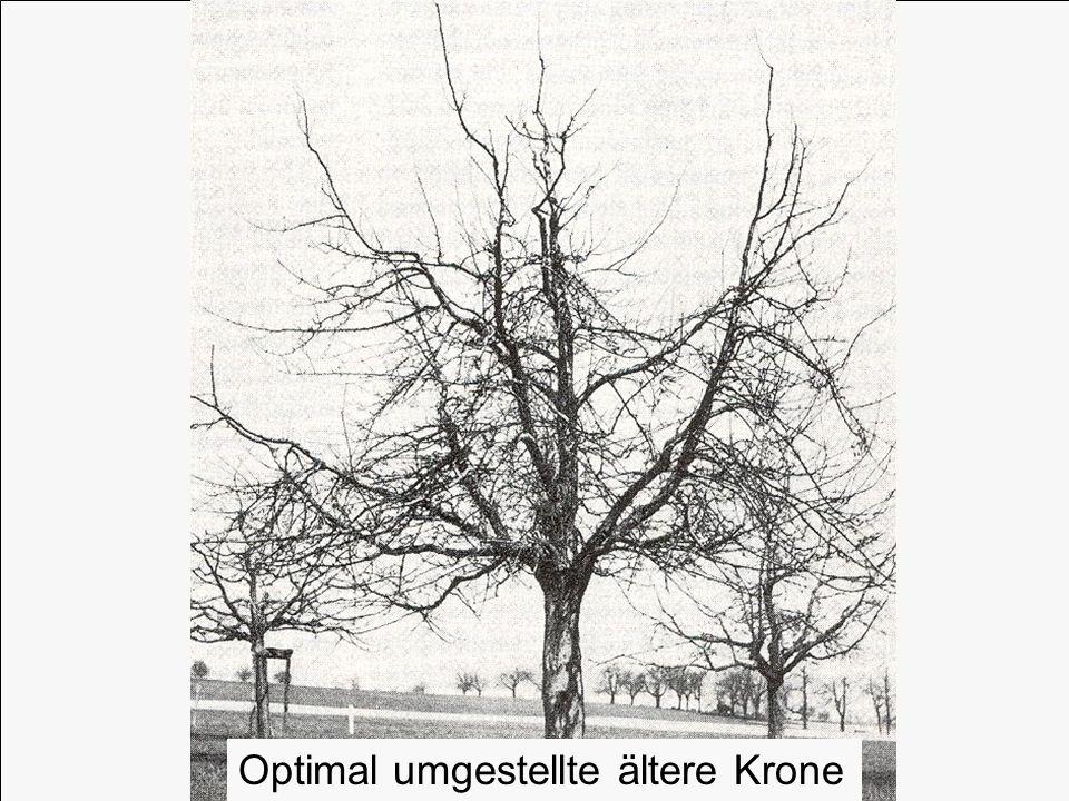 Optimal umgestellte ältere Krone