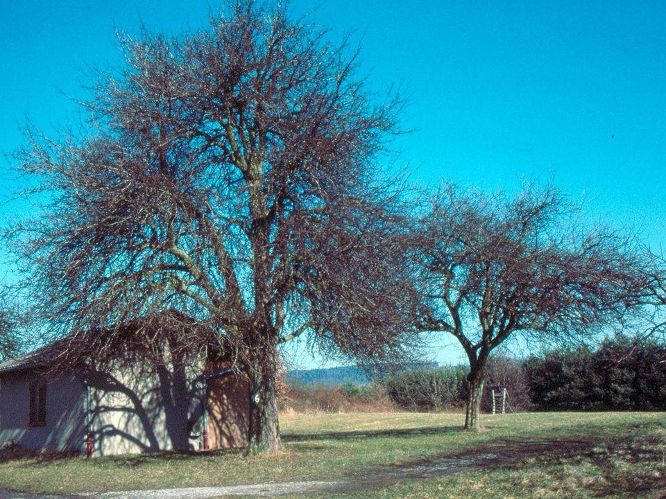 Foto ungeschnittener Bäume
