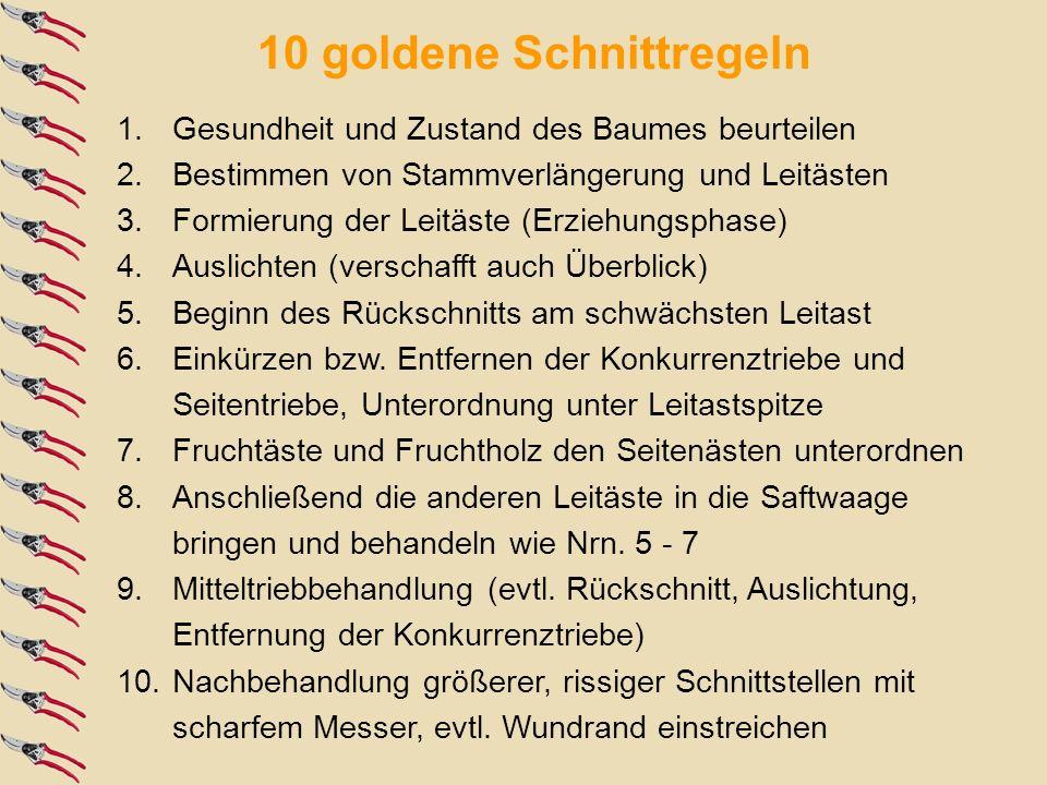 10 goldene Schnittregeln