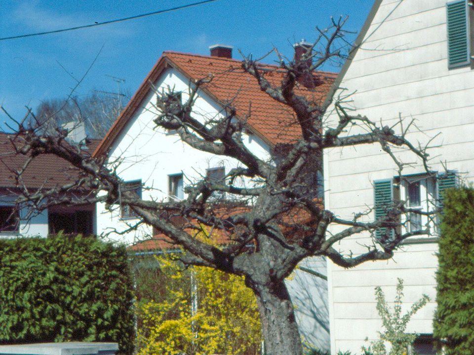 Foto verstümmelter Baum