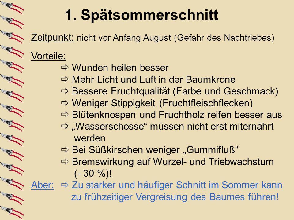 1. Spätsommerschnitt Zeitpunkt: nicht vor Anfang August (Gefahr des Nachtriebes) Vorteile:  Wunden heilen besser.
