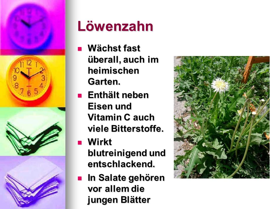 Löwenzahn Wächst fast überall, auch im heimischen Garten.