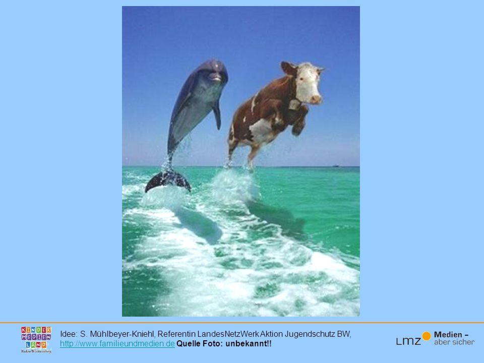 Und Sehen Sie sehr große Unterschiede zwischen den Delfinen