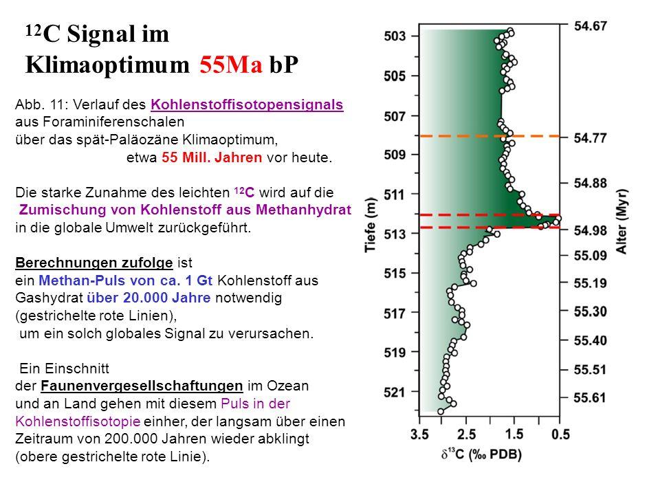 12C Signal im Klimaoptimum 55Ma bP