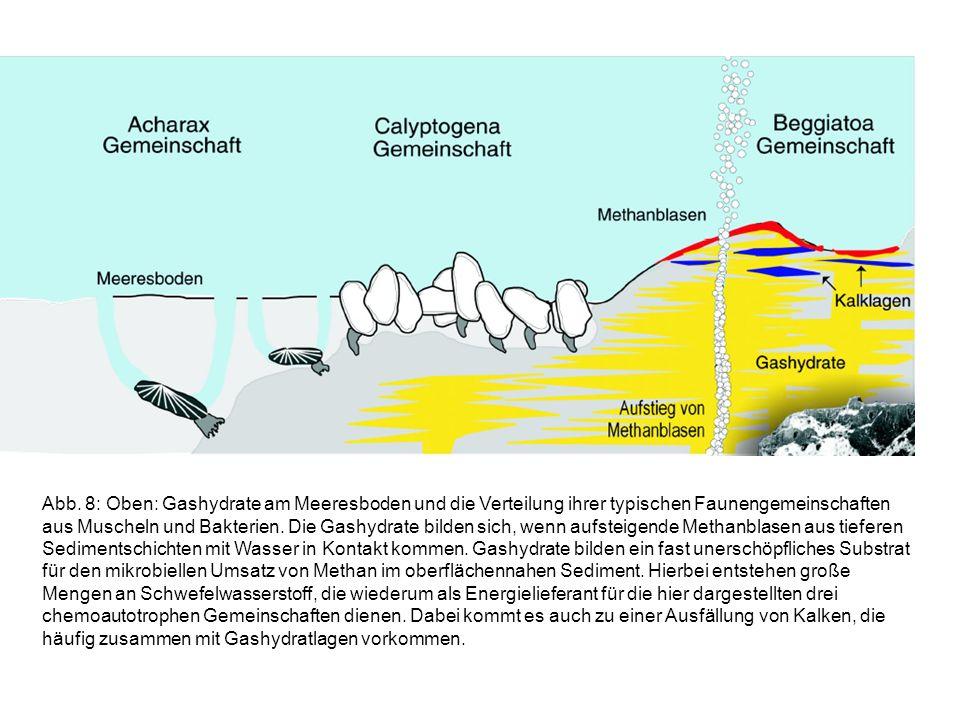 Abb. 8: Oben: Gashydrate am Meeresboden und die Verteilung ihrer typischen Faunengemeinschaften