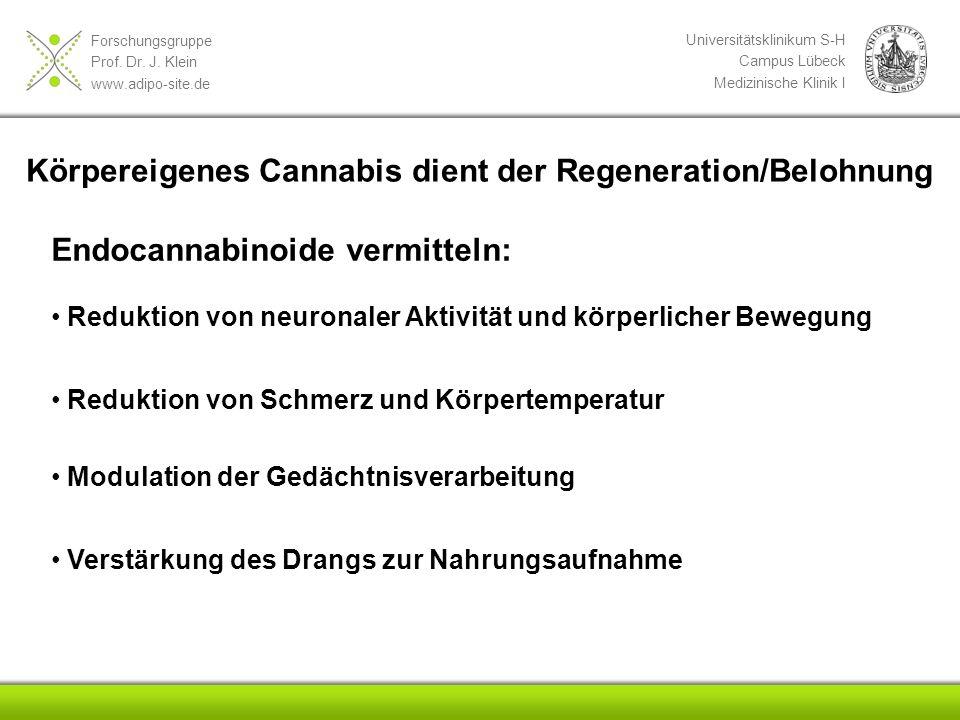 Körpereigenes Cannabis dient der Regeneration/Belohnung