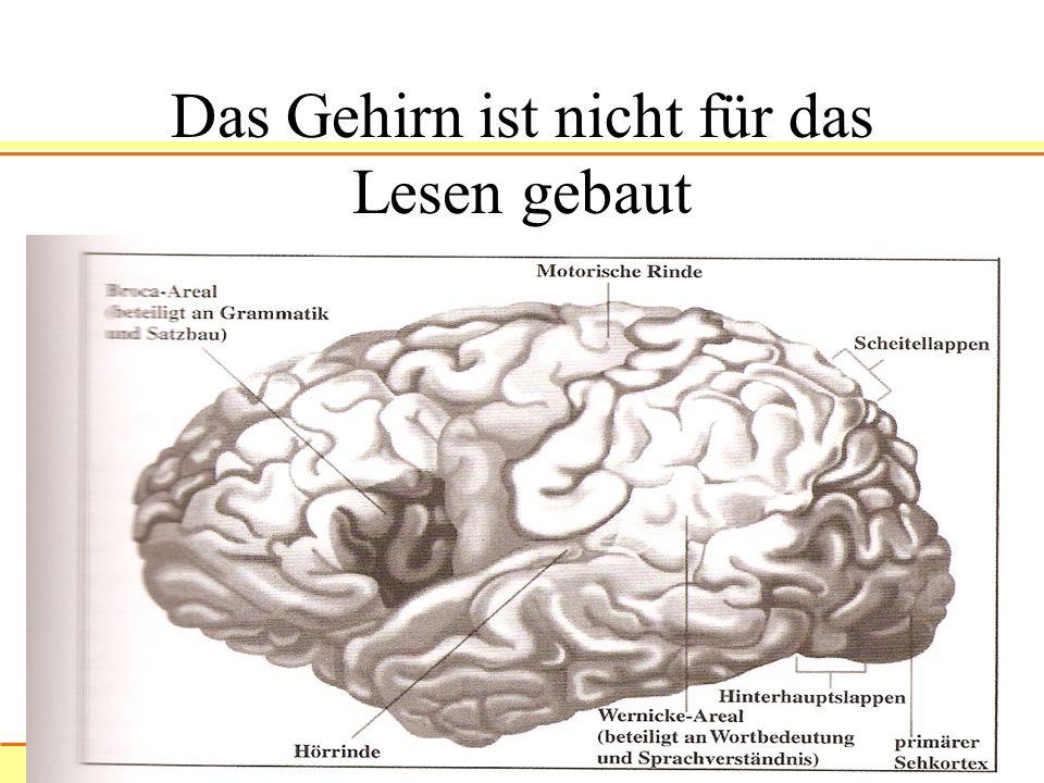 Das Gehirn ist nicht für das Lesen gebaut