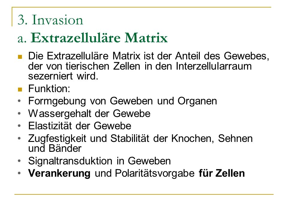 3. Invasion a. Extrazelluläre Matrix