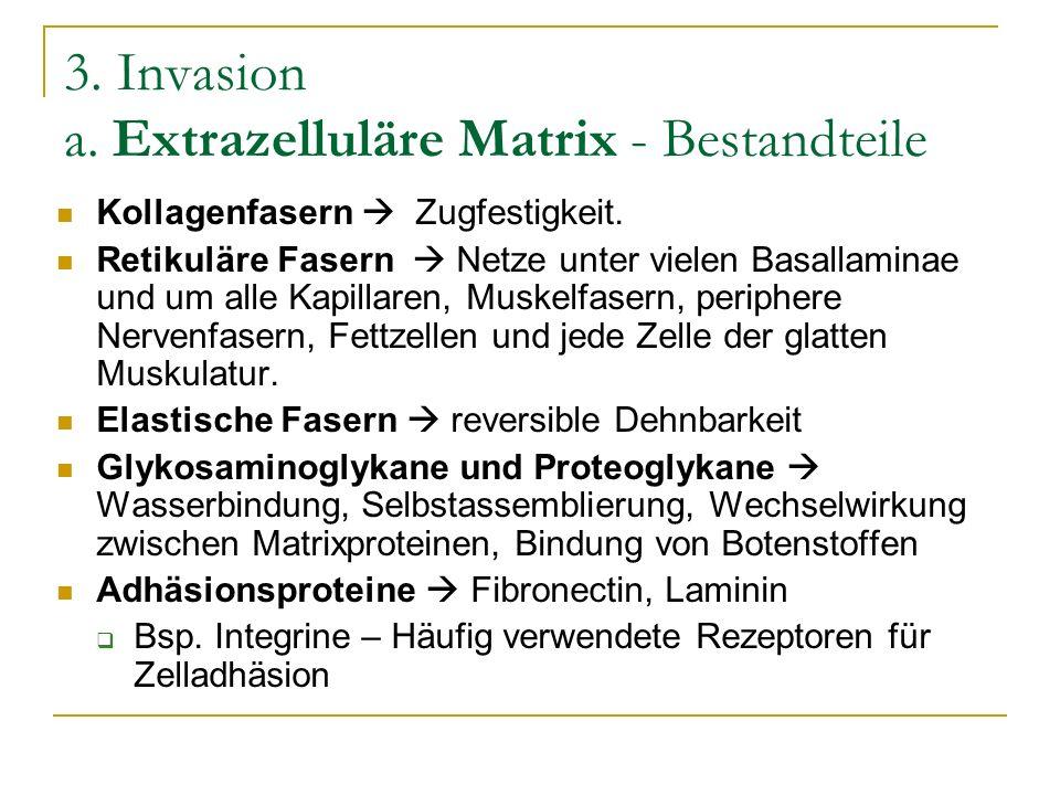 3. Invasion a. Extrazelluläre Matrix - Bestandteile