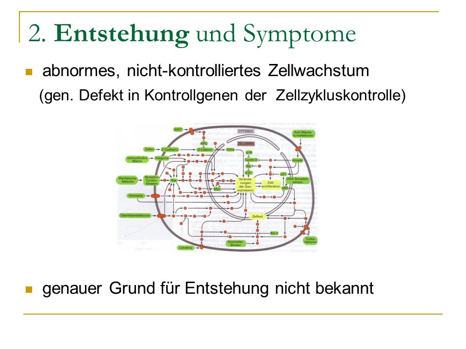 2. Entstehung und Symptome