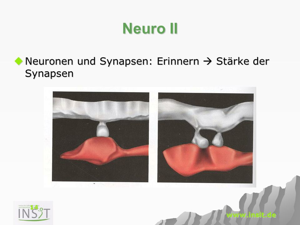 Neuro II Neuronen und Synapsen: Erinnern  Stärke der Synapsen