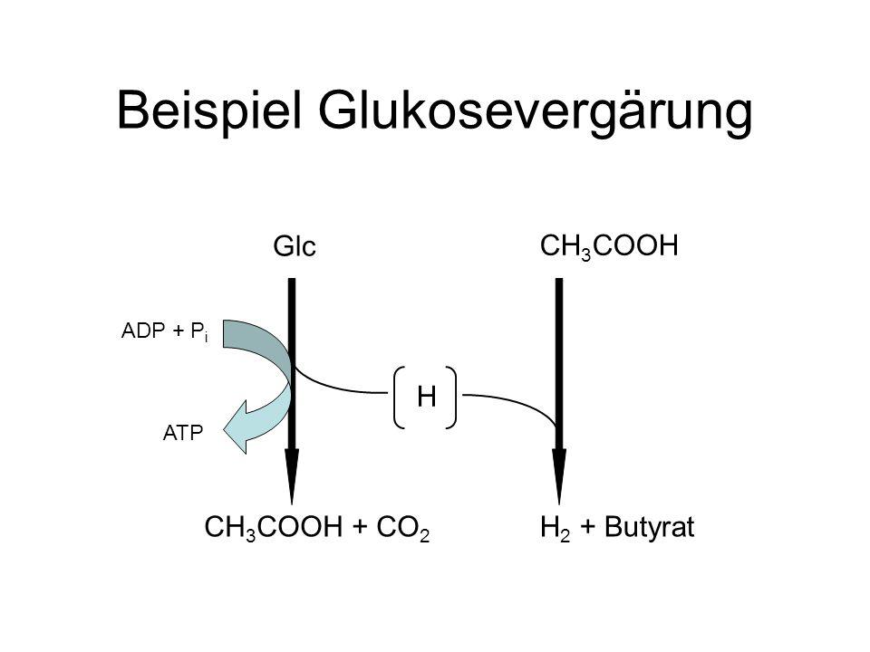 Beispiel Glukosevergärung