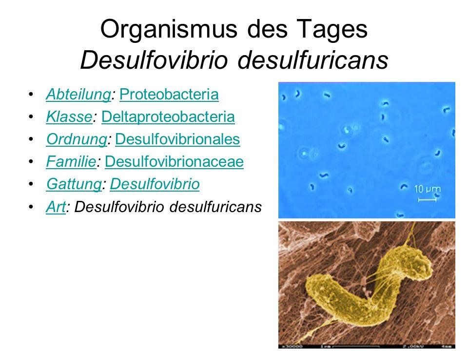 Organismus des Tages Desulfovibrio desulfuricans