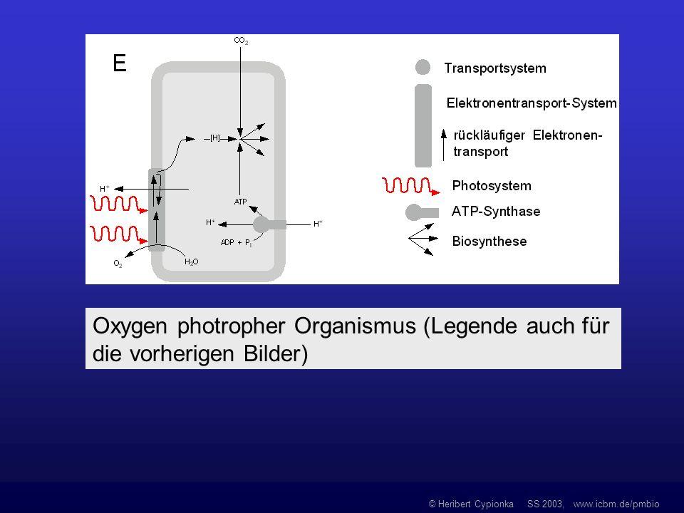 Oxygen photropher Organismus (Legende auch für die vorherigen Bilder)