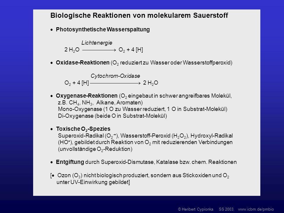 Biologische Reaktionen von molekularem Sauerstoff