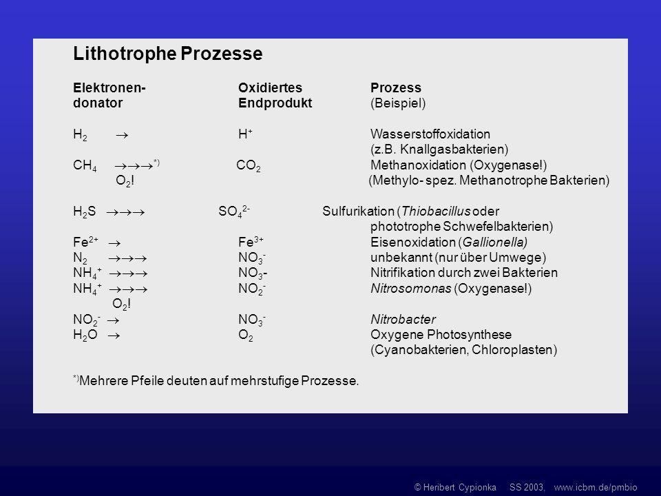 Lithotrophe Prozesse Elektronen- Oxidiertes Prozess